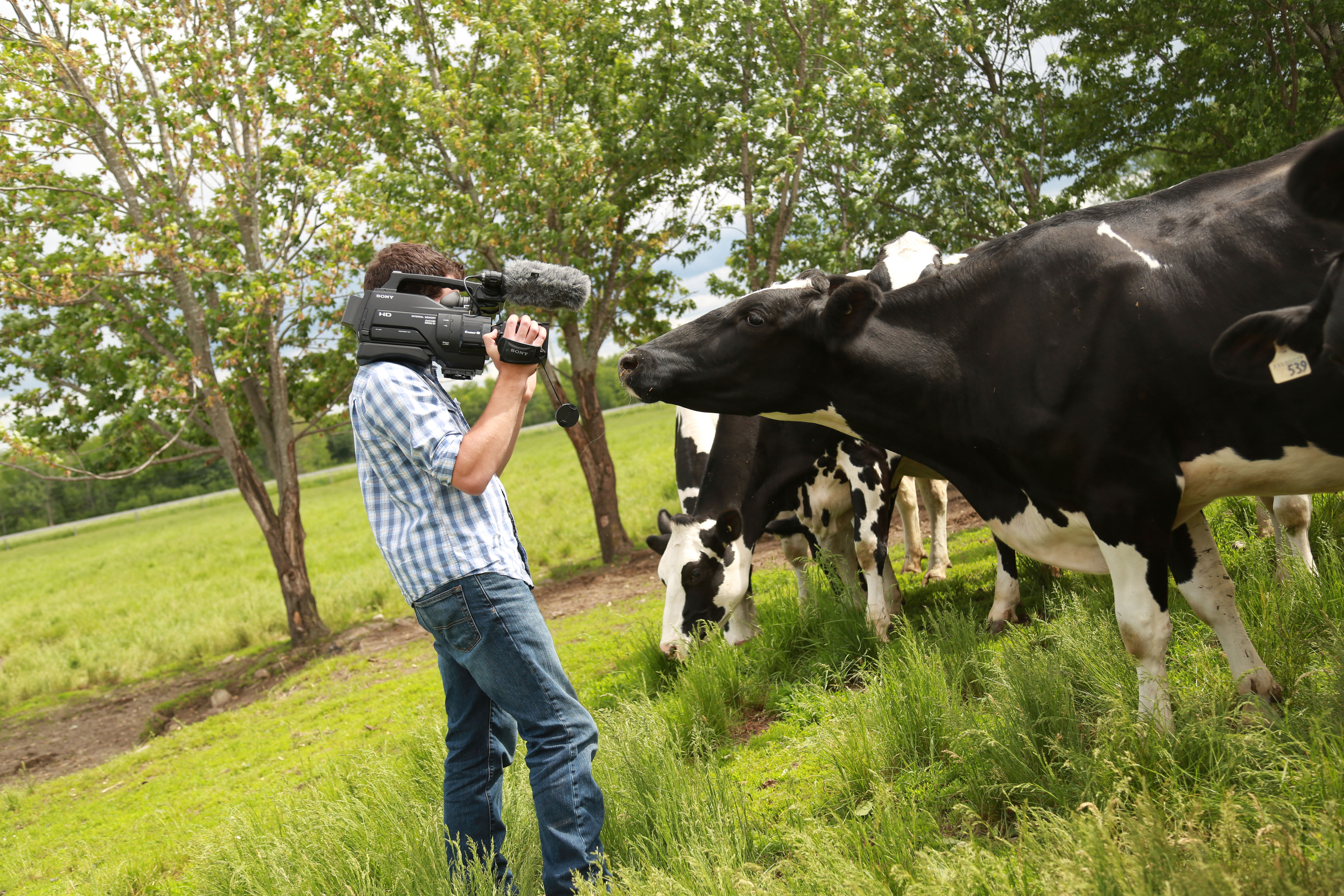 Bruce Sargent on-site in pasture with holstein cows
